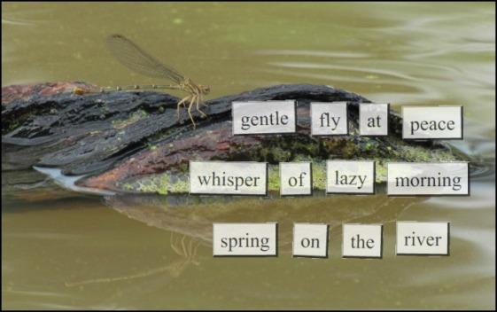 gentle-fly